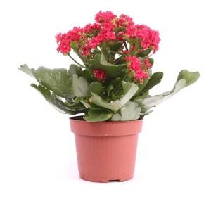 Купить комнатные цветы в томске доставка цветов по израилю эйлат